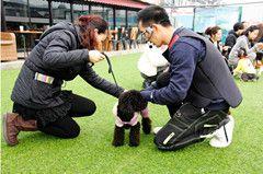 宠物美容师培训课程B级