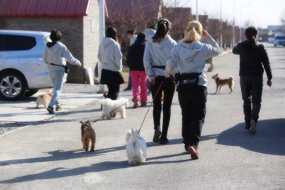 北京调良宠物培训学校 狗狗训练